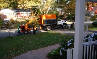 vienna va leaf clean up schedule