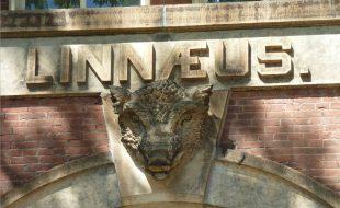 Linnaeus Charlottesville VA