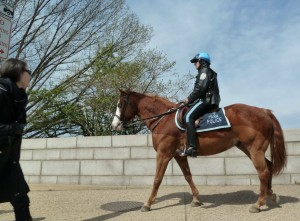 U. S. Park Police Mounted Patrol at Cherry Blossoms Washington DC