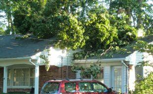 Tree toppled during Hurricane Irene Vienna VA