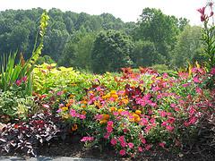Meadowlark Botanical Garden Vienna Virginia