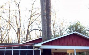 Tree house Reston Virginia