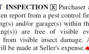 Termite Inspecion Paragraph Northern Virginia
