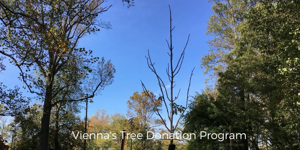 new trees planted Vienna VA