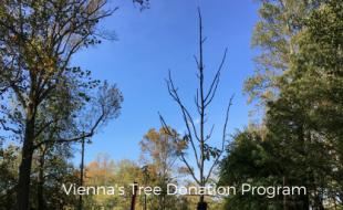 Tree Donation Fund in Vienna