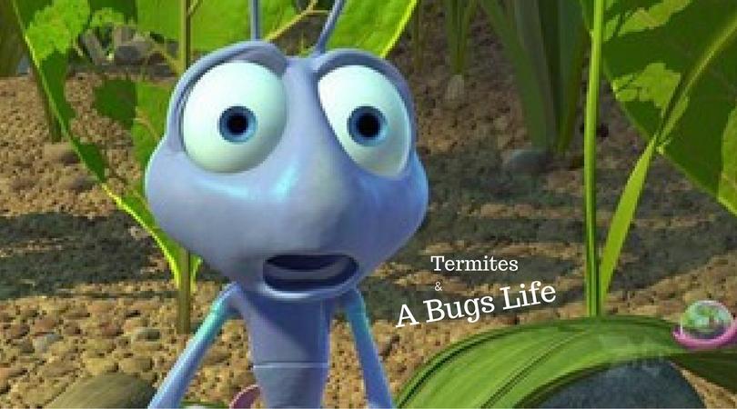 wdi report termites
